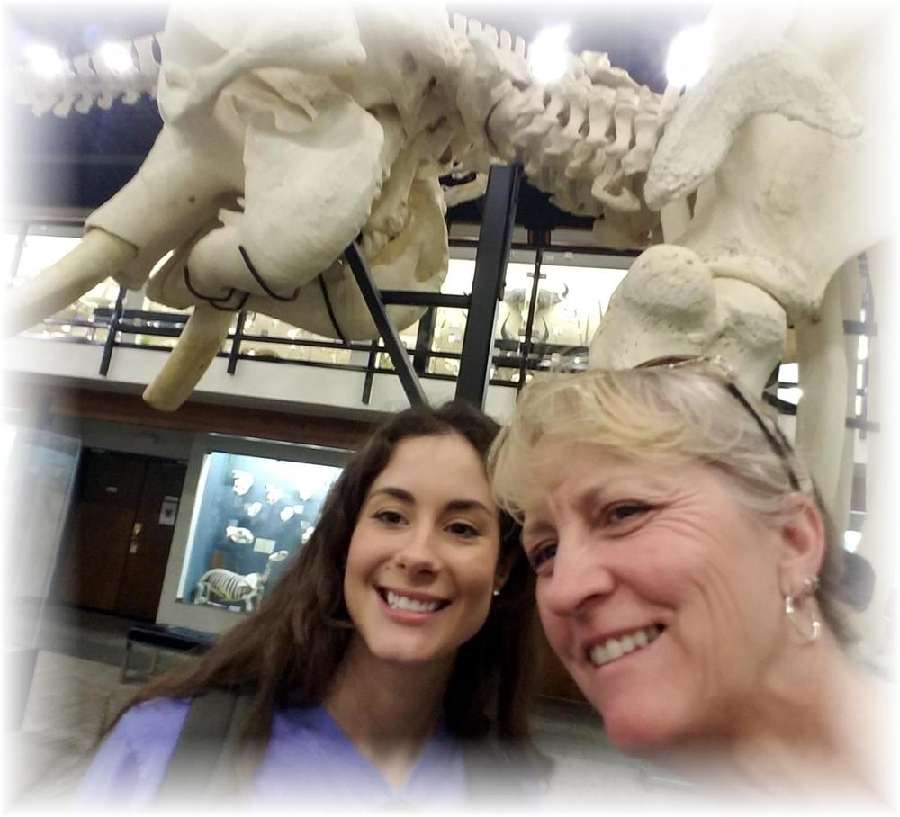Selfies at Museum of Osteology ~ Elephants - Running Wild Studio Elephant Skeletons Elephant Bones
